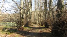 8  - The Lady's Walk, Bowhill Estate